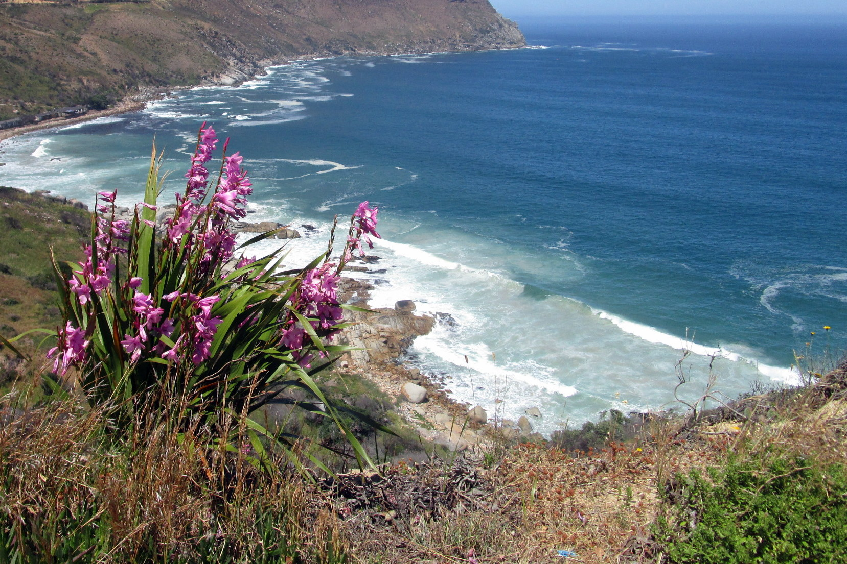 Chapmans Peak Ocean Outlook Flowers