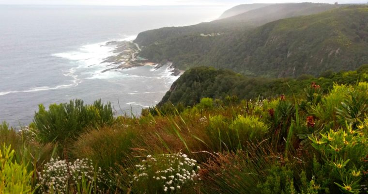 [:de]Garden Route: Tsitsikamma National Park[:en][Travel] Garden Route: Tsitsikamma National Park[:]