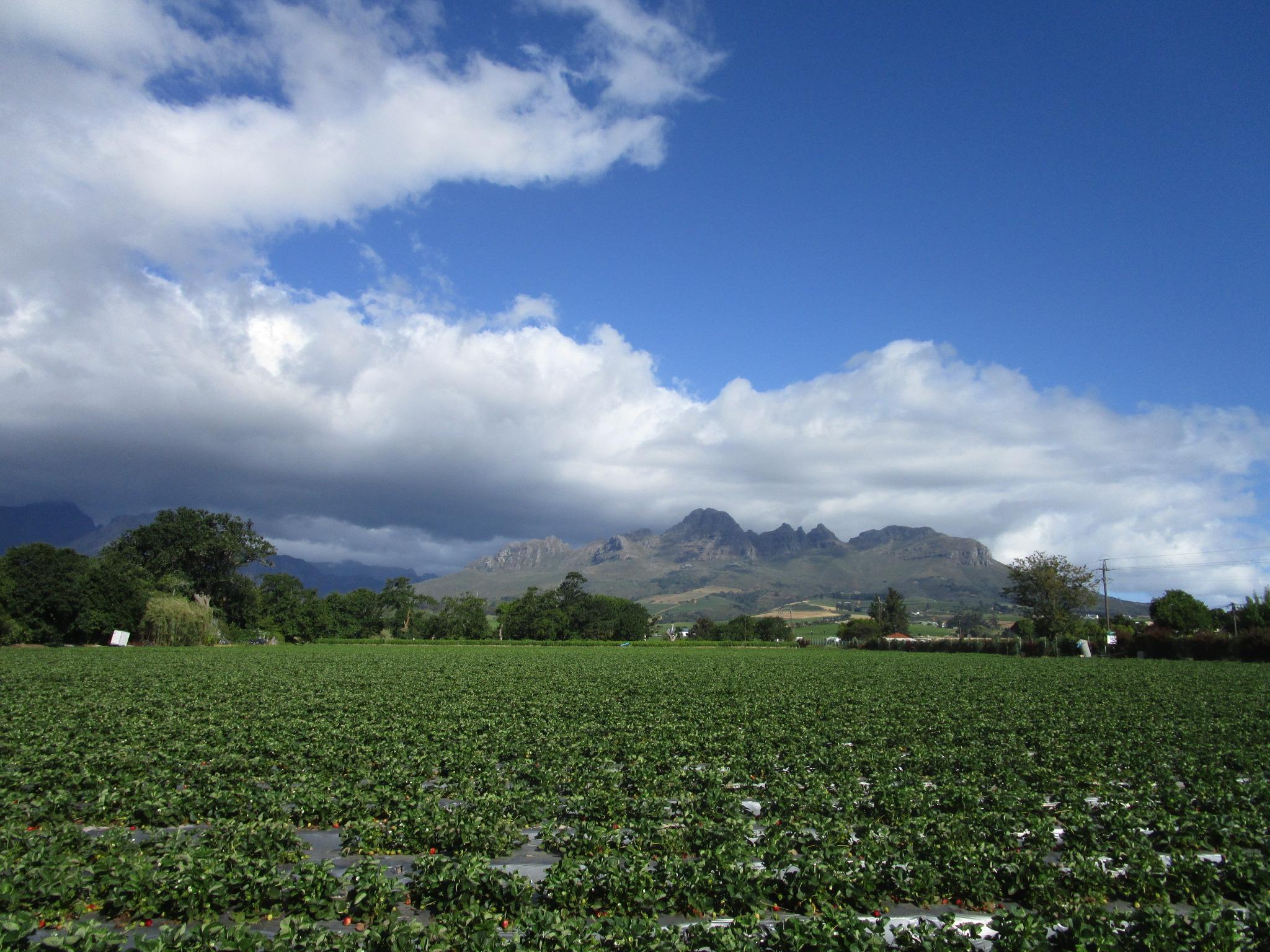 Stellenbosch-Kapstadt-Weinregion