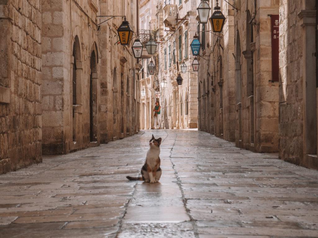 Katze in Dubrovnik